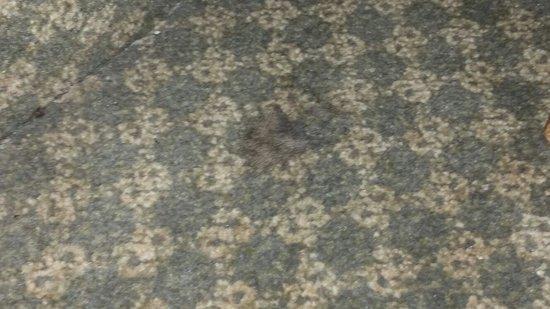 Days Inn Frankfort : Gross wad of animal hair.