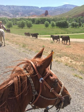 The Hideout Lodge & Guest Ranch: Cattle drive