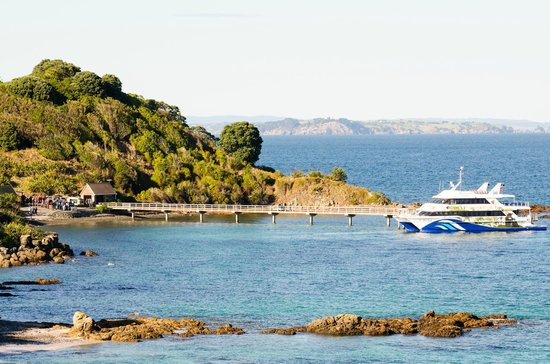 Tiritiri Matangi Island: 360 Discover ferry having just disembarked passengers