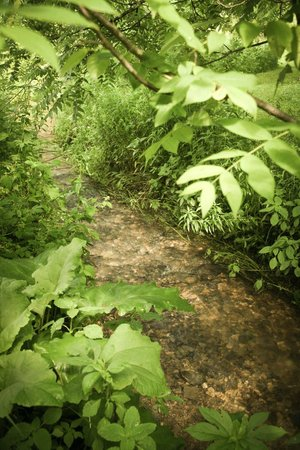 Hawk Valley Retreat & Cottages: Stream on the grounds