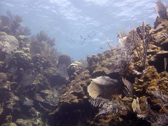 Tobri Divers: Pristine coral and sponges of the south side