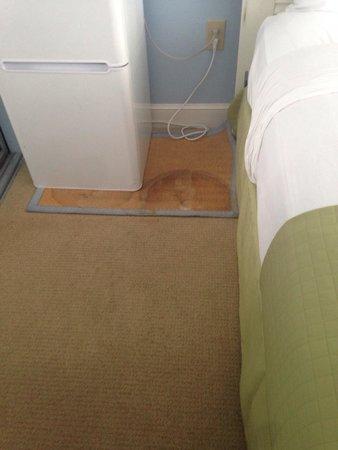Kingston Plantation Condos by Hilton: Filthy carpet