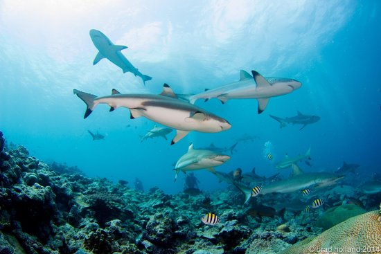 Manta Ray Bay Resort: Yap Shark Diving
