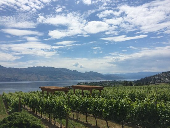 West Kelowna, Canadá: Lunch facing the vineyard