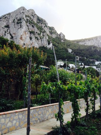 Magical stay at the Capri Wine Hotel