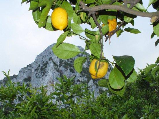 Magical stay at the Capri Wine Hotel- Wonderful gardens