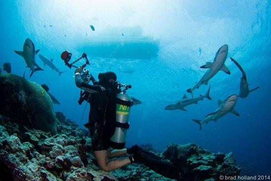Manta Ray Bay Resort: Yap Shark Diving