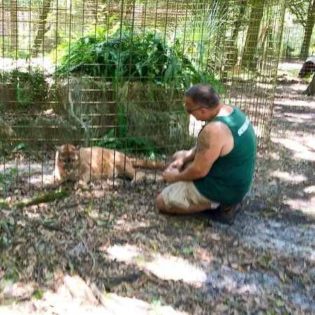 Big Cat Rescue: cougar and his keeper/friend. June 2014
