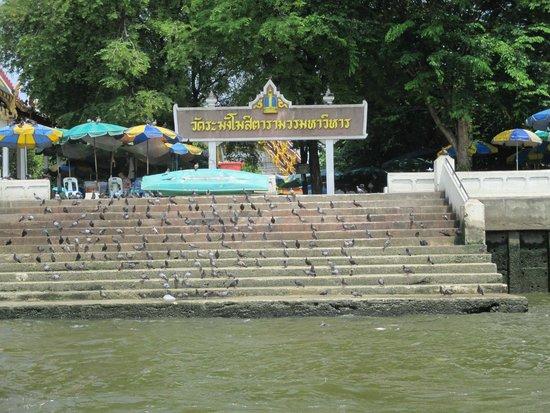 Chao Phraya River: kuil banyak burung liarnya
