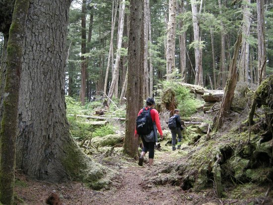 Metlakatla Wilderness Trail: Old growth hiking