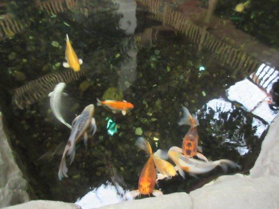 C'mon Inn of Casper: Koi Fish C'Mon Inn