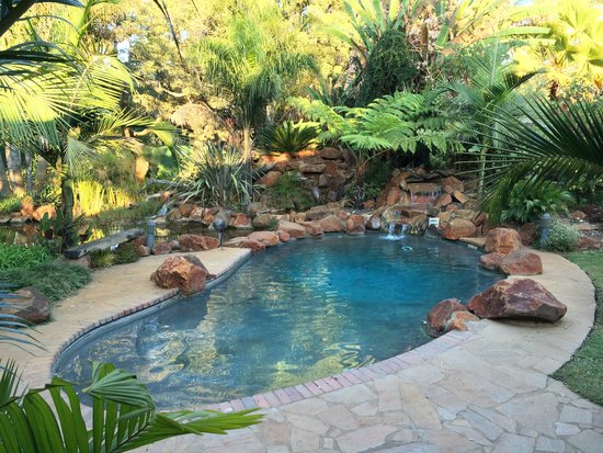 Casa Kadiki Bed & Breakfast: Pool infront of Guineafowl