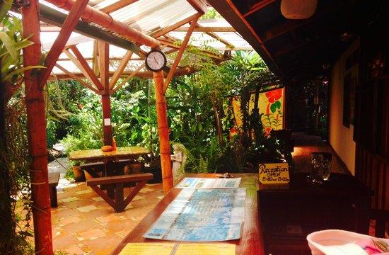 Jacaranda Hotel and Jungle Garden: Entrada y áreas de jardín