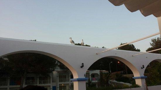 Club Vista Bahia: Pesky seagulls :)