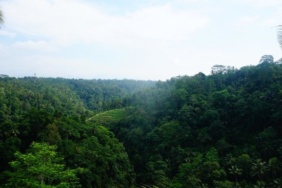 Ayung Resort Ubud: View from the restruant