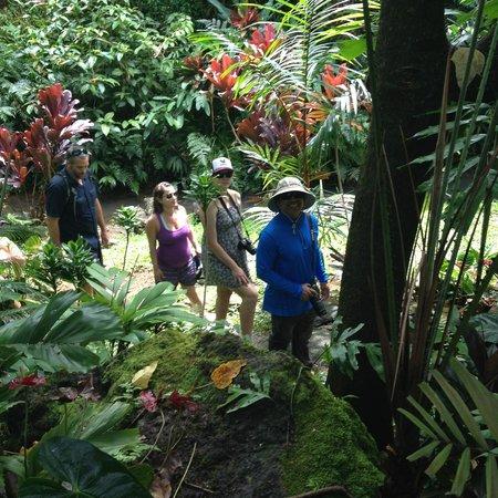 Princeville Botanical Gardens - Tours : Part of the walk