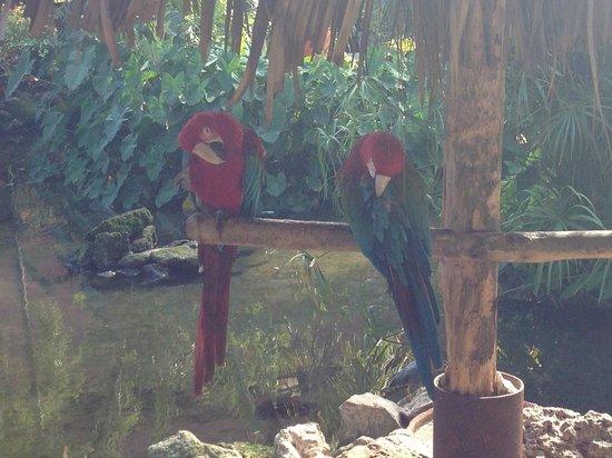 Bavaro Princess All Suites Resort, Spa & Casino: Попугаи