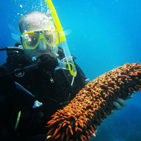 Reef Experience : Cucumber anyone?
