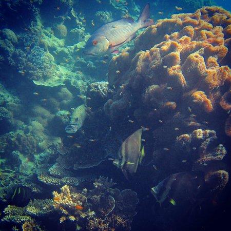Reef Experience : Hasting Reef
