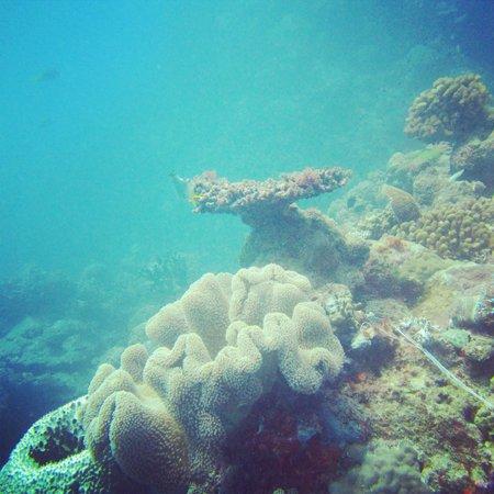 Reef Experience: Hastings reef