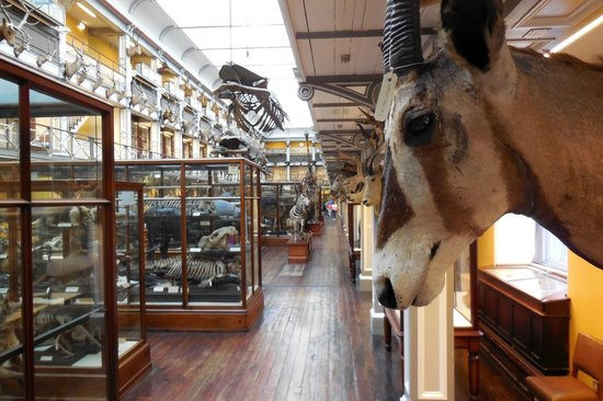 National Museum of Ireland - Natural History : Awesome Place