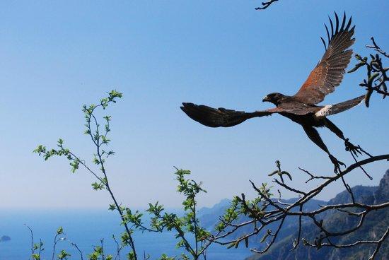 Le Ali nel Vento - Birds of Prey Experience