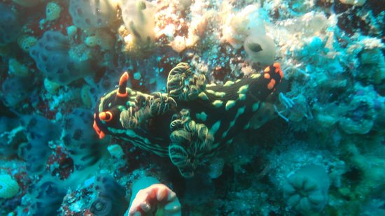 Panglao Island, Filipina: Nudis