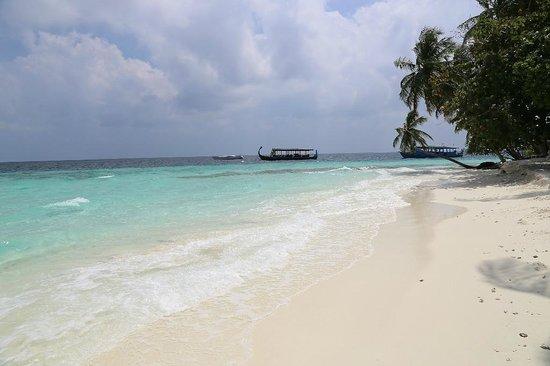 Fihalhohi Island Resort : Вид