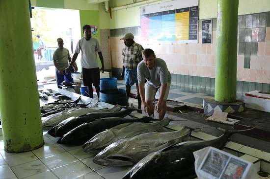 Male Fish Market: Полный тунец (тунец-молодец)