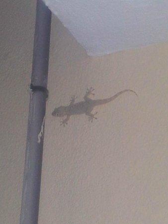 Plazamar Serenity Resort: Jaszczurka na balkonie
