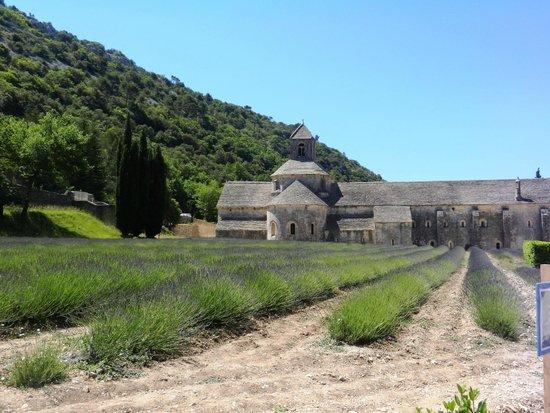 Abbaye Notre-Dame de Sénanque : lo spirito di S. Benedetto tradotto in pietra