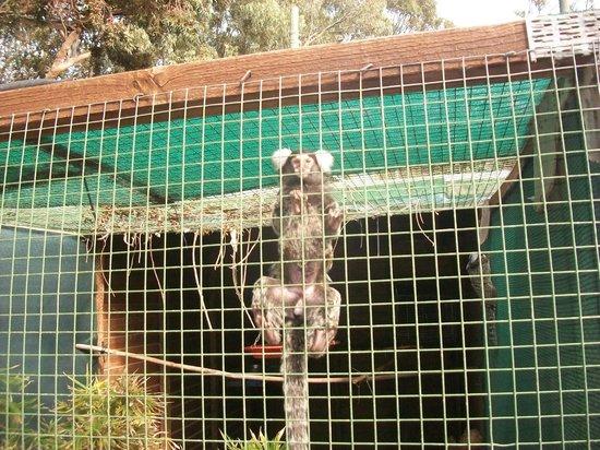 Monkey Town Primate Centre: visitando los mono bb