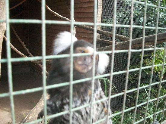 Monkey Town Primate Centre: haciendole mimos