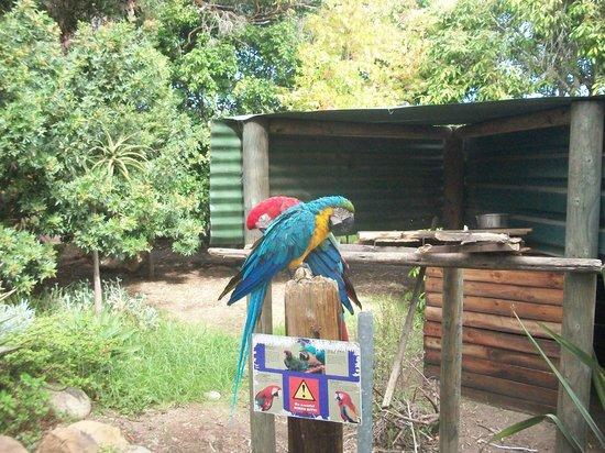 Monkey Town Primate Centre: hermosos pajaros