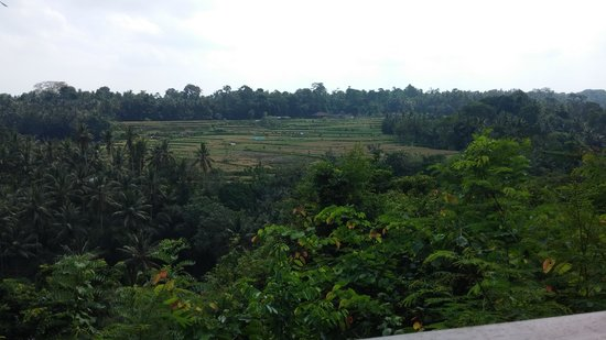 The Samaya Bali Ubud: View from hotel breakfast area (scene restaurant)