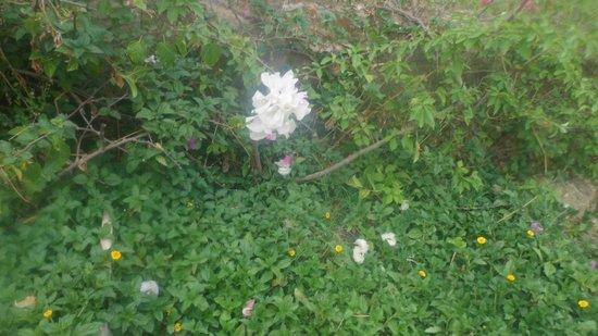 Trident Udaipur: flower
