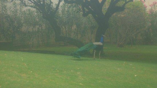 Trident Udaipur: garden