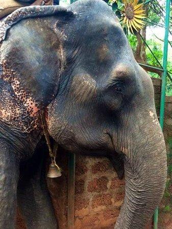Hem Travels Day Tours: Elephant rides