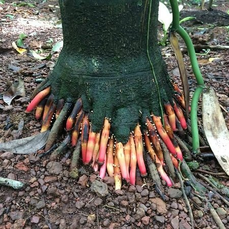 Hem Travels Day Tours: Roots at the spice plantation