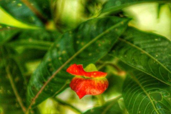 Forest Alive: kissing flower