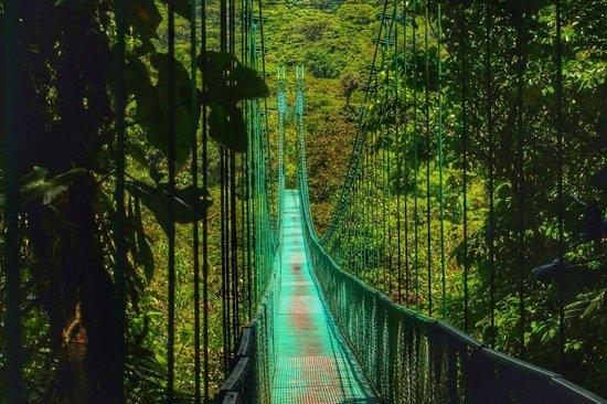 Forest Alive: hanging bridge monteverde