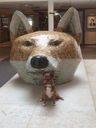 Hotel Tylosand : En av våra hundar hittade en kompis