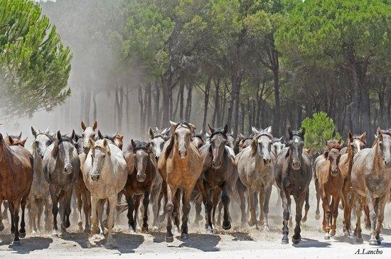 Yelloh! Village Camping Doñarrayan Park: Saca de las yeguas
