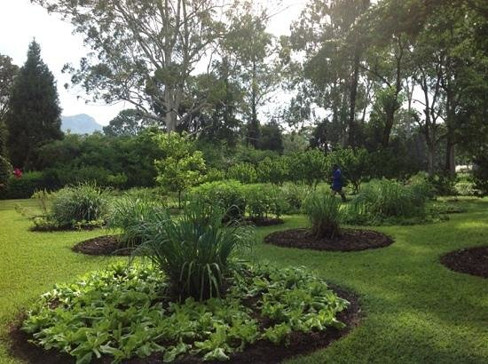 """Cafe Mandala : letuce & herb garden. treated with """"waterguard"""""""