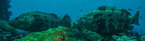 Goodtime Adventures, Koh Tao: Grouper Chumpnhon Pinnacle