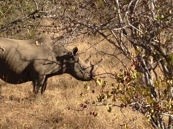 African Blue Day Tours: Black Rhino sighting