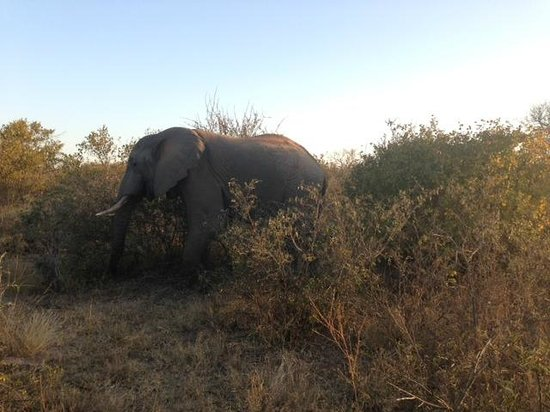 African Blue Day Tours: Elephant sighting