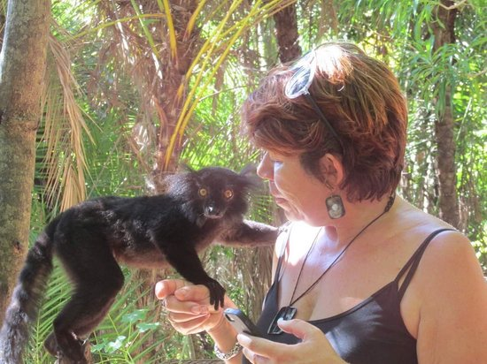 293 on Komba Guest House: Marcine at the Lemur park