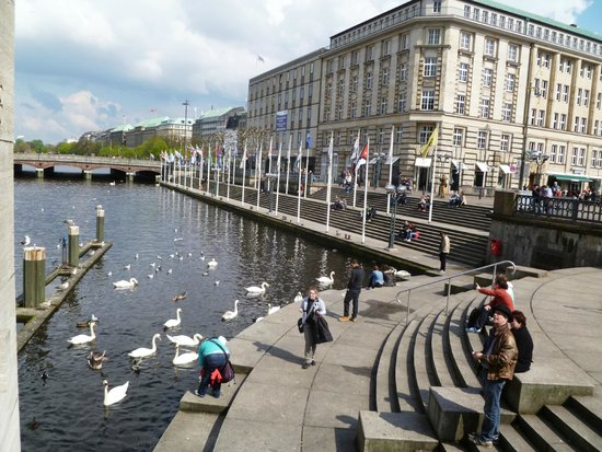 Swans on the opposite side of the Rathaus square