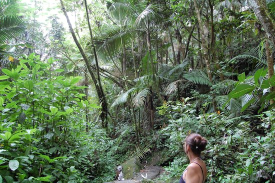 The El Yunque Rain Forest: One of the hiking trails